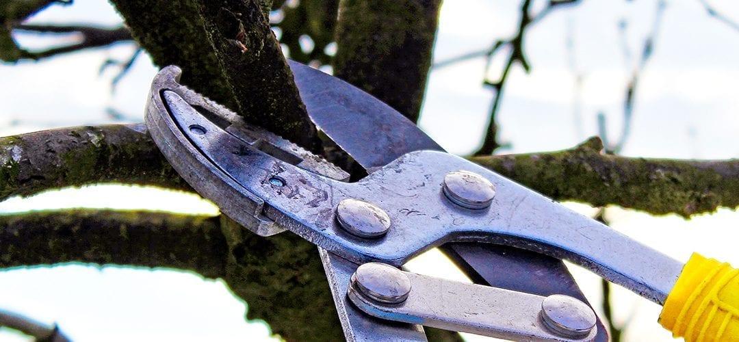 Pruning During Winter