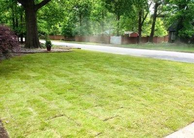 grass 5.IMG_1539