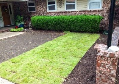 grass 6.IMG_1540