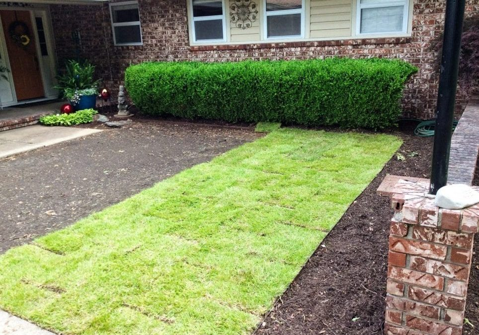 What's The Best Grass To Grow In Fayetteville, AR?