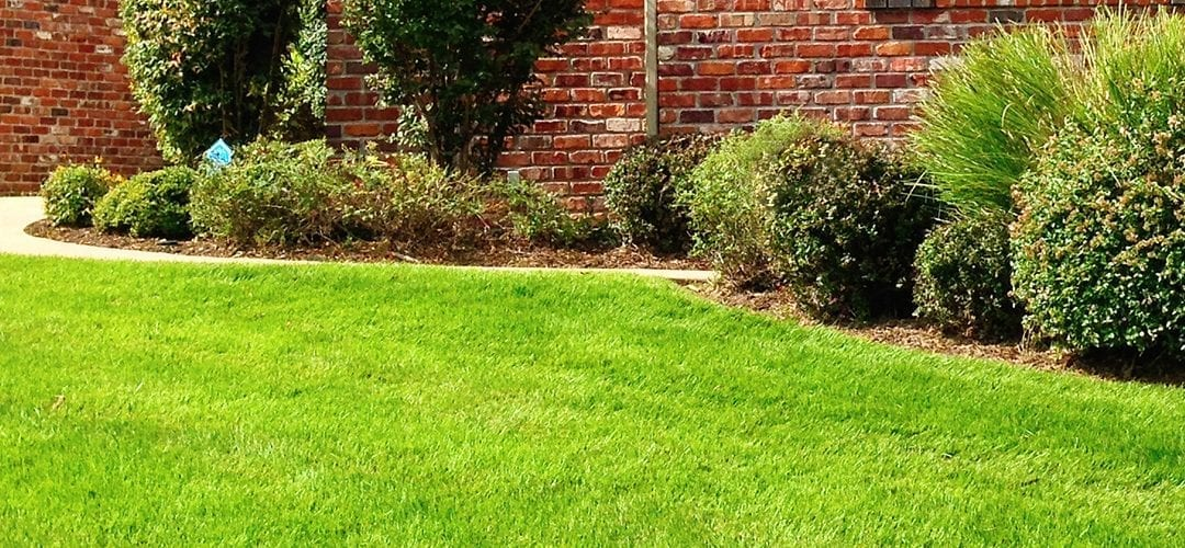 SIX PRO TIPS FOR A HEALTHY LAWN