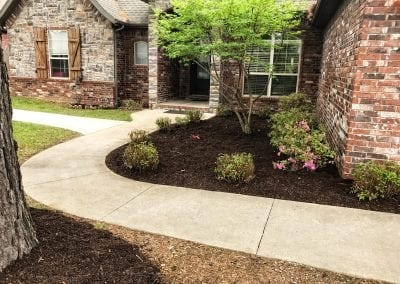 Trees and shrubs with mulch