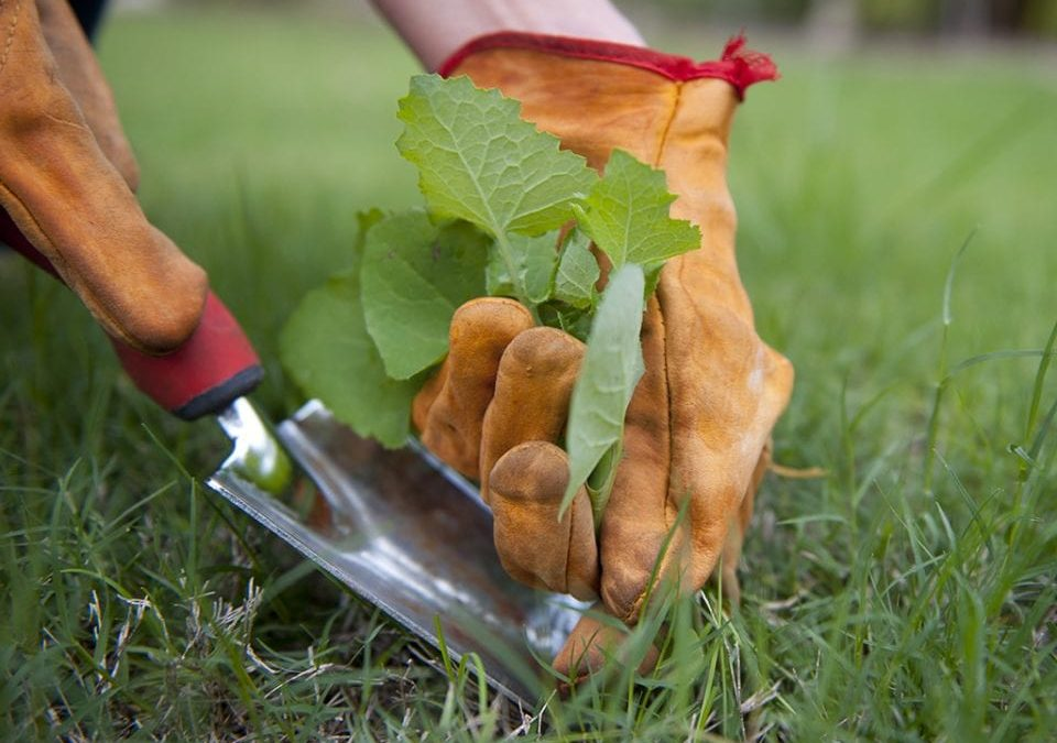 3 Easy Tricks For Weeds