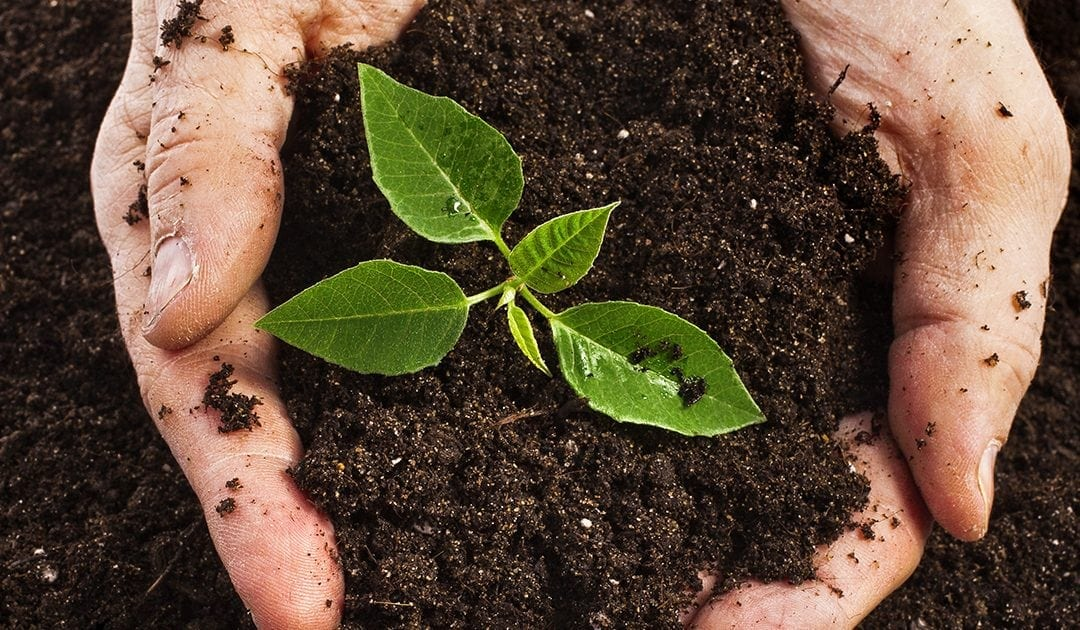 Reduce Weeds & Lawn Disease with Healthy Soil
