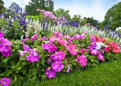 Pretty manicured flower garden with colorful azalea