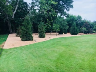 A mulch area with trees and shrubs, surrounded by a grass lawn, part of a Landscape project in Cave Springs, AR
