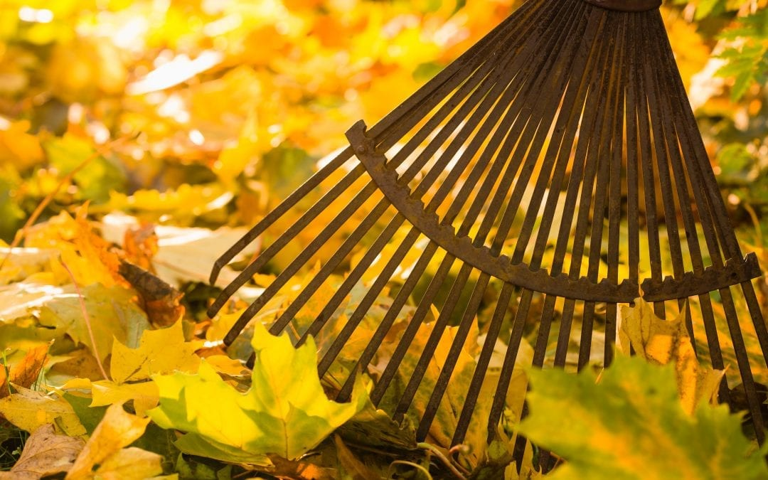 Why a Leaf Removal Service Beats Raking Any Day Of The Week!