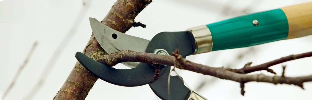 The Importance Of Pruning In The Winter Dormant Season