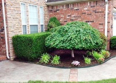 After hedges trimmed, Fayetteville, AR