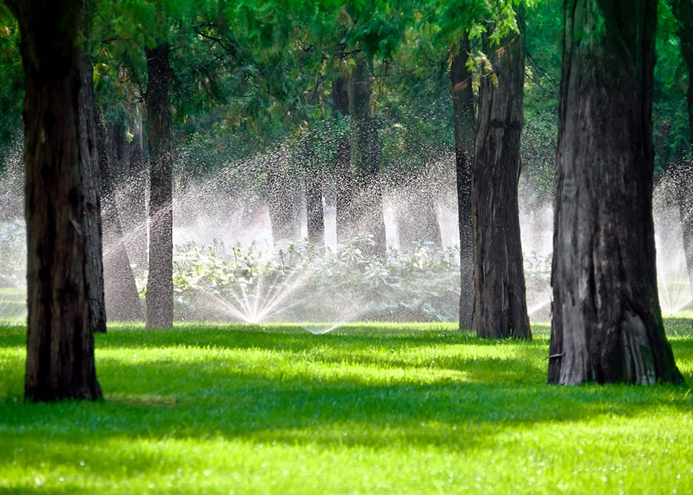Sprinkler droplets in a lawn gardening with trees.