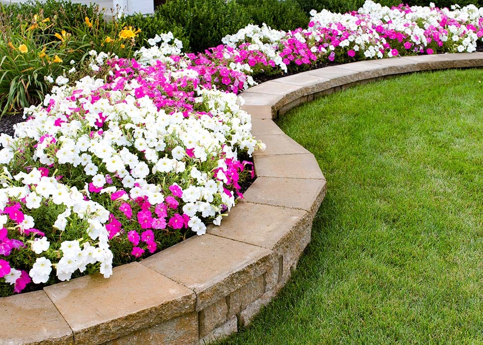 Pink and White petunias in a flower bed with retaining wall and grass. These are the sort of hardscapes A Clean Cut Lawn Care can design & install.