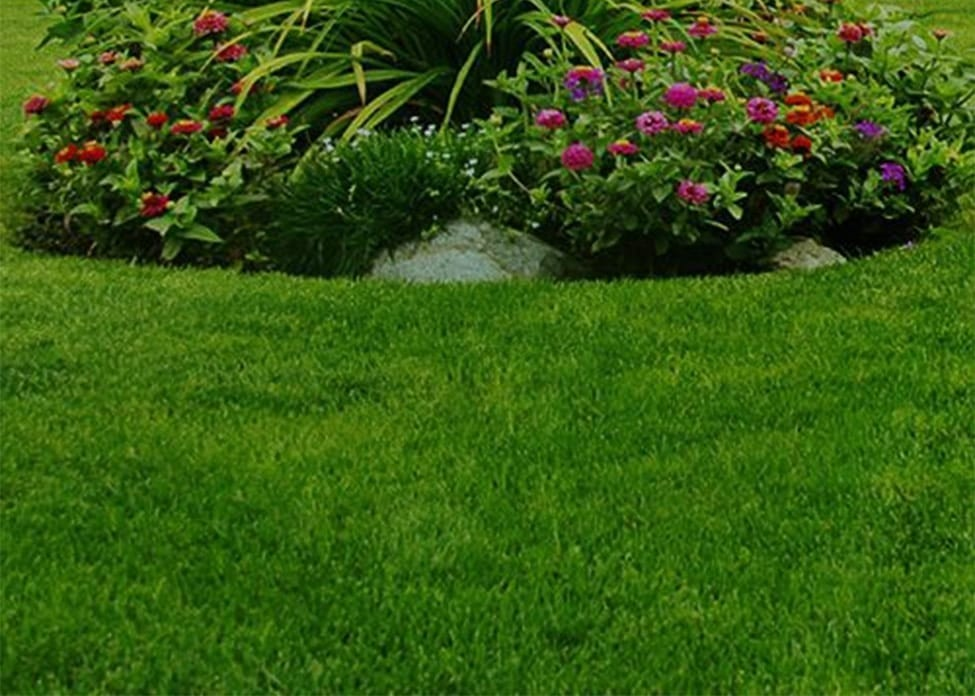 A close up of some green grass and landscaped plants, showing the value of aeration, overseeding, fertilization, weed barriers, soil testing, and organic soil rebuilding.