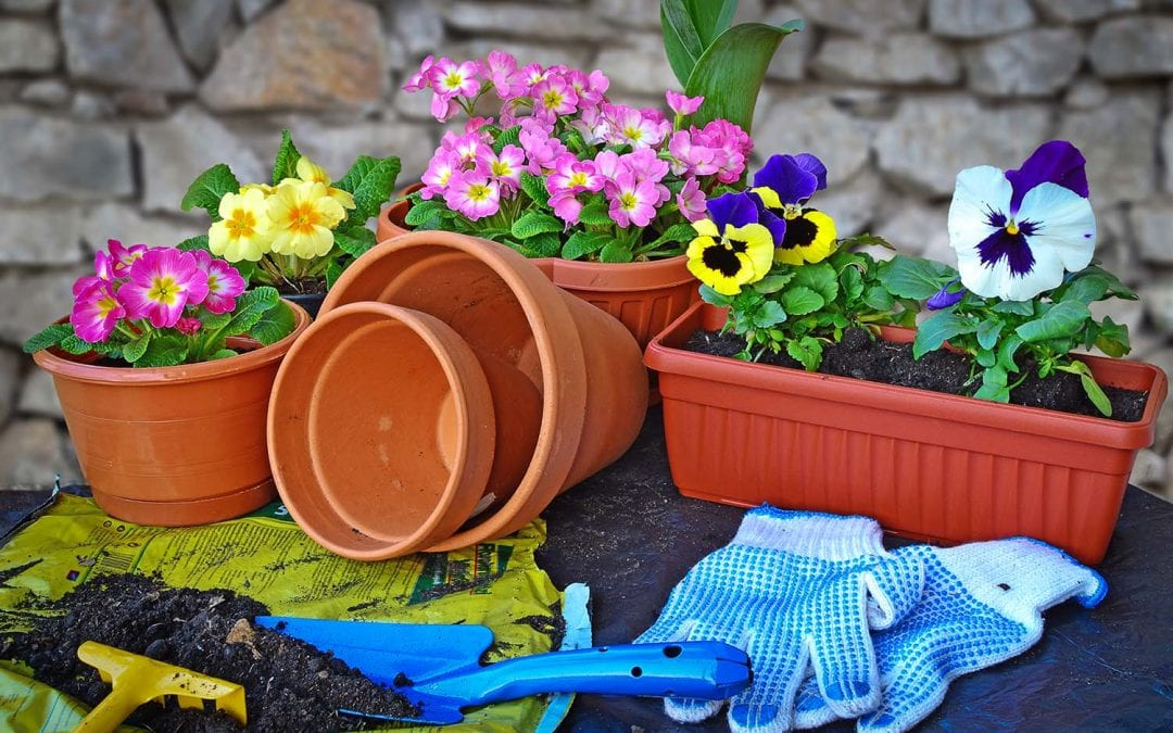 How To Garden With Containers